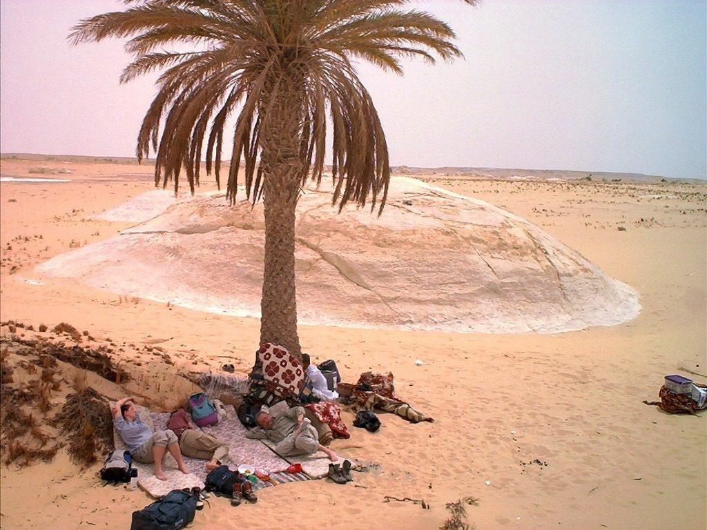 Camel Safari - White Desert 12