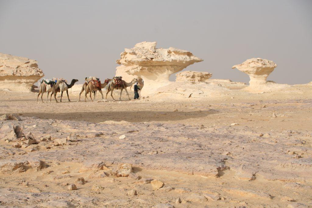 Camel Safari - White Desert